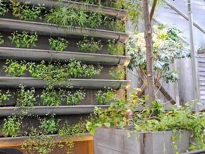 Rain Gutter Garden